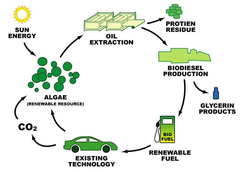 Global Enzim Biofuel Amilase Market