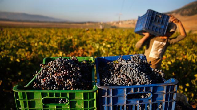 Global Mesin Pemanen Anggur Market
