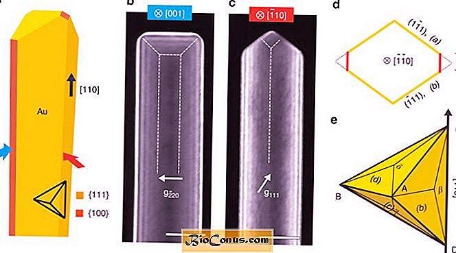 Global Nanowires Emas Market