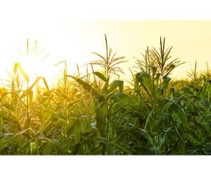 Global Agrigenomics Market