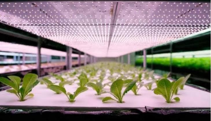 Global Pertanian Tanaman Pertumbuhan Lampu LED Market