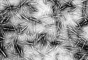 Selulosa NanoCrystals (CNC) Pasar