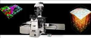 Mikroskop Confocal Multi-Foton Pasar
