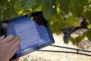 Perangkat Lunak Manajemen Kebun Anggur Pasar