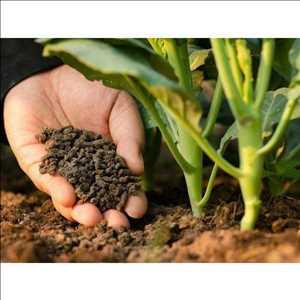 Nutrisi dan Pupuk Mikronutrien Pasar