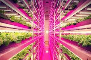 Pencahayaan LED Hortikultura