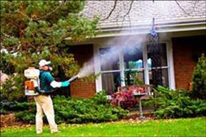 Layanan Pengendalian Nyamuk